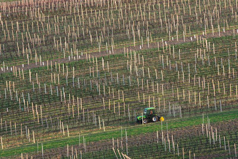 Spring Agricultural Rural Scene With Small Tractor And Rows Of Vineyards. A Green Tractor Cultivates The Vineyard Plantations. Mo royalty free stock photo