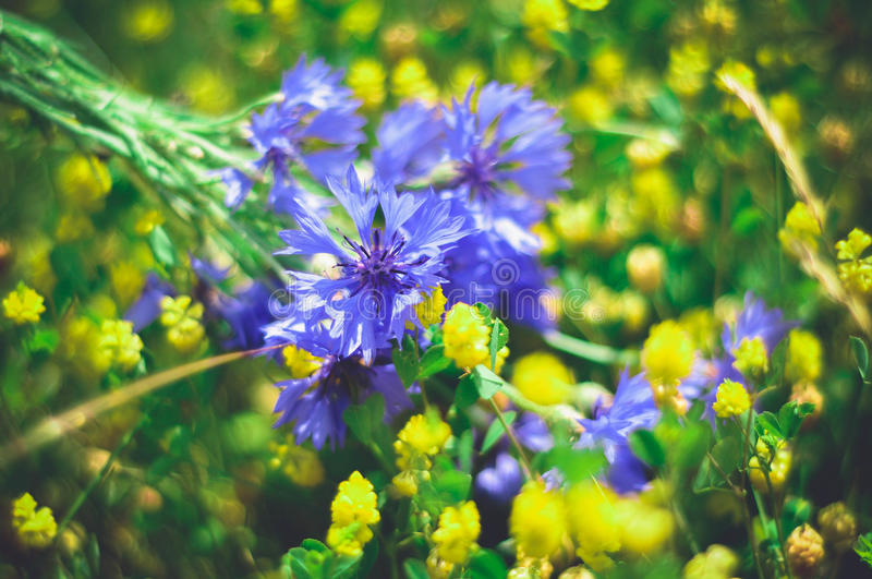 Spring air royalty free stock photography