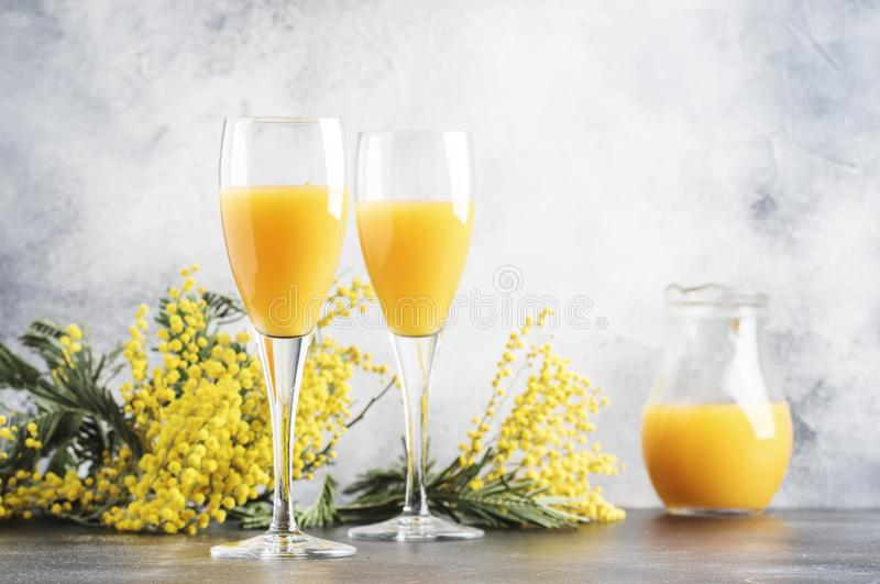 Spring alcohol cocktail mimosa with orange juice and cold dry champagne or sparkling wine in glasses, gray bar counter background. With yellow flowers, copy royalty free stock image