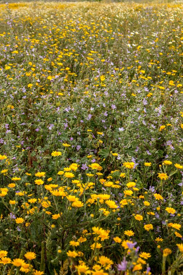 Spring Algarve flora royalty free stock photo