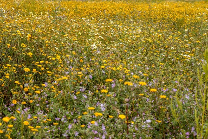 Spring Algarve flora stock photo