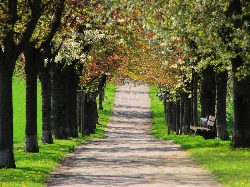 Spring alley royalty free stock photo