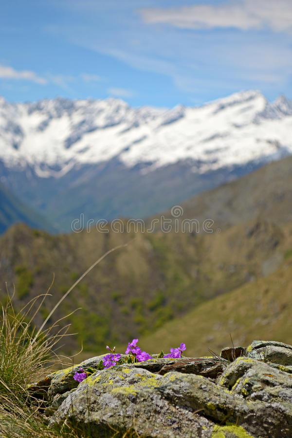 Download Spring in the Alps stock photo. Image of landscape, mountains - 31368604