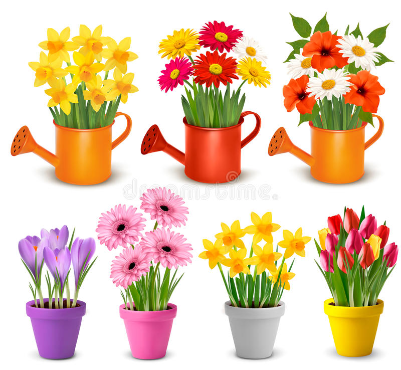 Free Spring And Summer Colorful Flowers In Pots Royalty Free Stock Image - 90766766