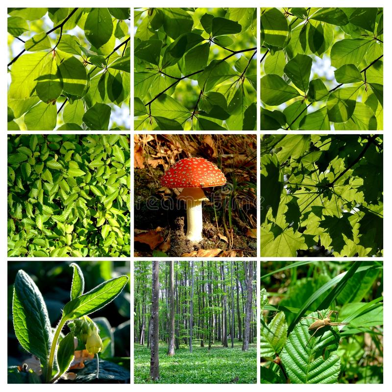 Free Spring And Summer Forest Details With Mushroom 1 Stock Image - 14177971