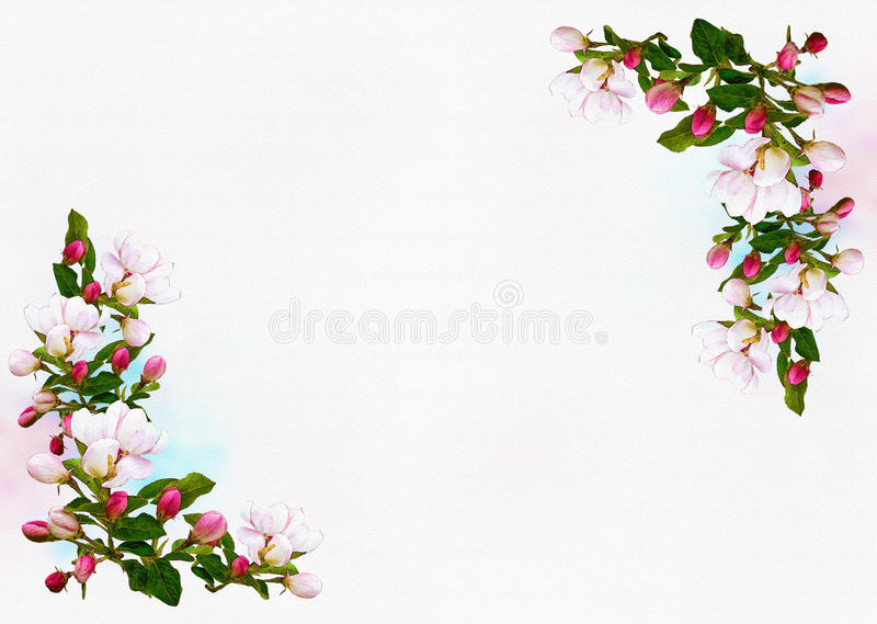 Spring Apple flowers border background royalty free stock photography