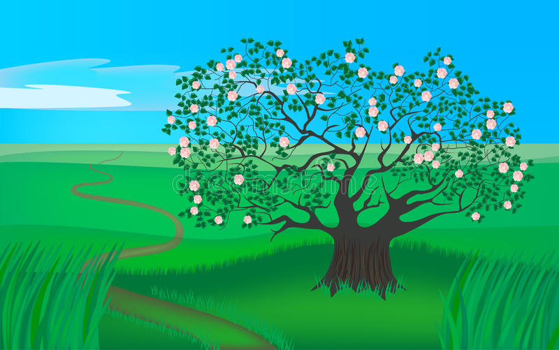 Download Spring apple tree stock illustration. Image of drawing - 13122966