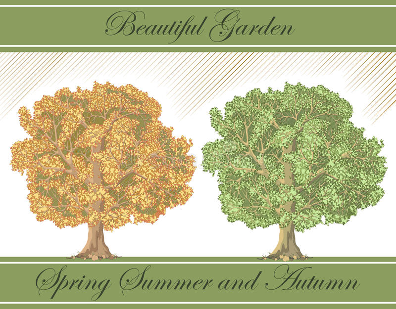 Spring and autumn detailed trees -vector
