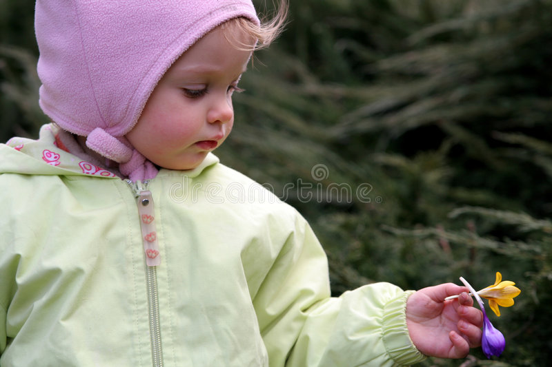 Spring baby. Little baby dropping crocuses stock photo