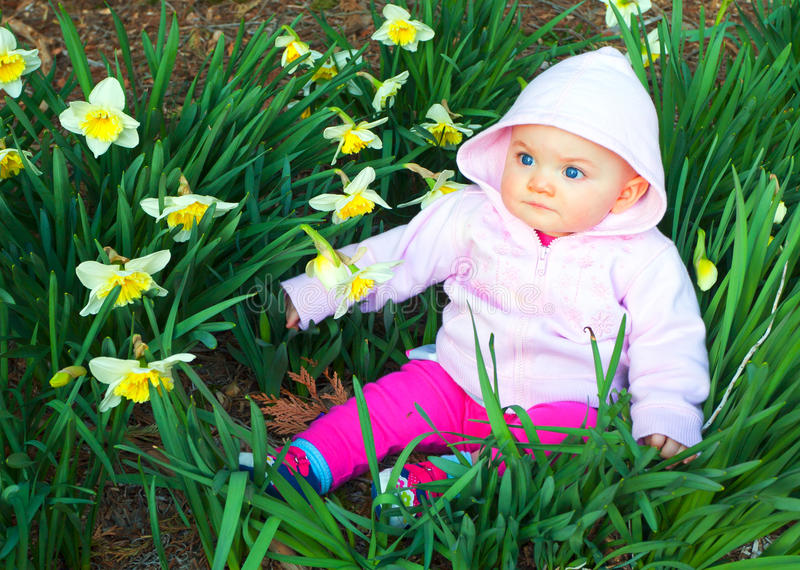 Spring baby in daffodils. Infant girl sitting among pretty daffodils. Time period is very late winter almost spring. Infant is eight to nine months old royalty free stock image