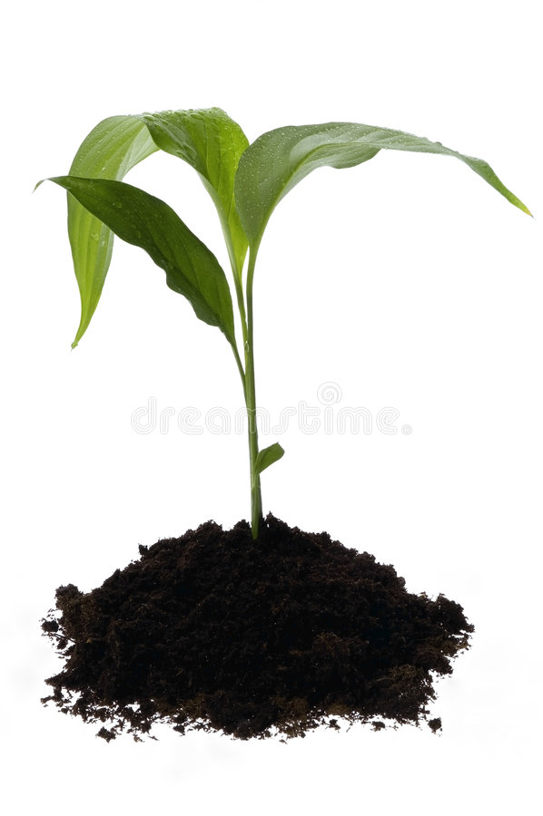 Spring baby plant stock photo