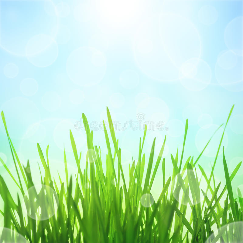 Spring Background. Spring abstract nature background with sun effect and bokeh. Green grass with blue sky royalty free stock photos