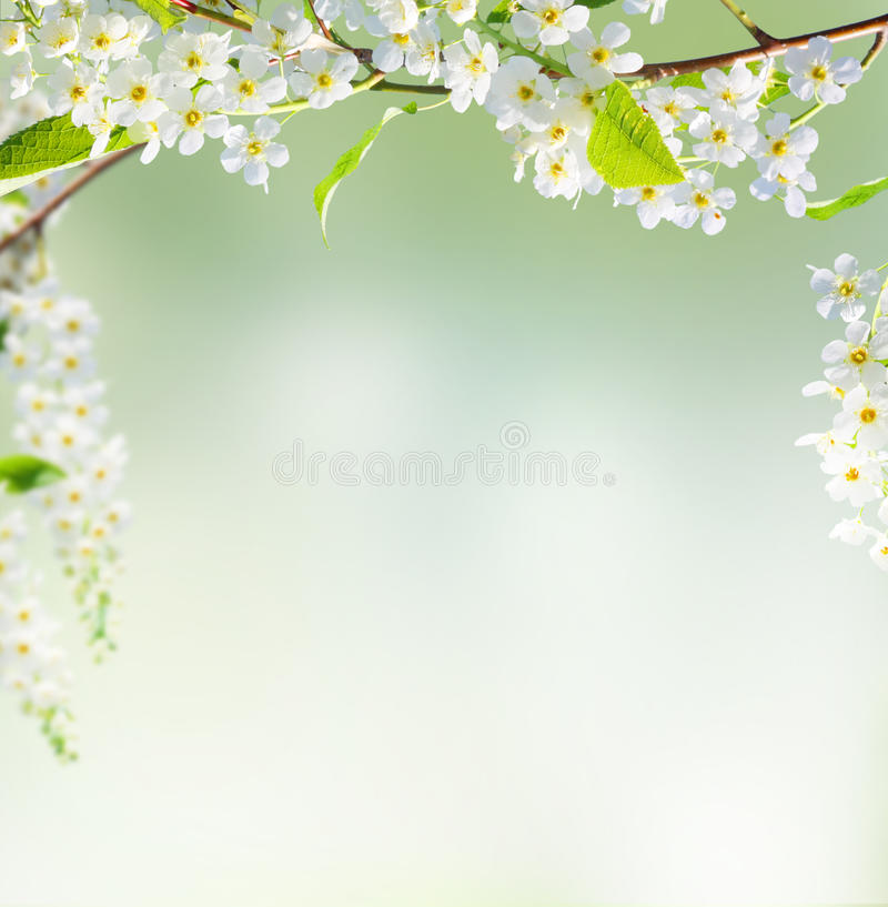 Free Spring Background Stock Photography - 37532642