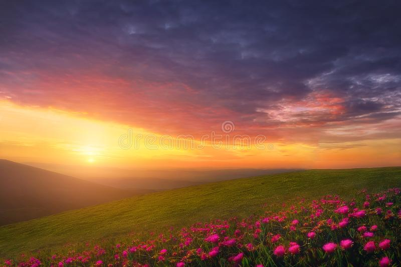 Spring background with beautiful landscape with flowers at sunset stock photo