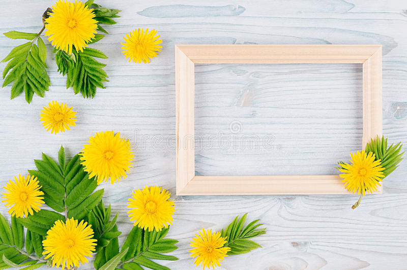 Spring background of blank wood frame, yellow dandelion flowers, young green leaves on light blue wooden board. royalty free stock images