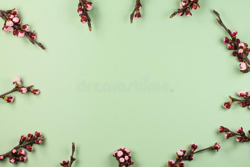 The spring background with blooming cherry twigs. royalty free stock photo