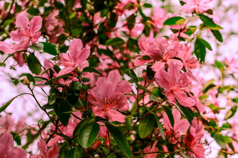 Spring background of blooming flowers. White and pink flowers. Beautiful nature scene with a flowering tree. Spring flowers. Spring blossom background in stock photos