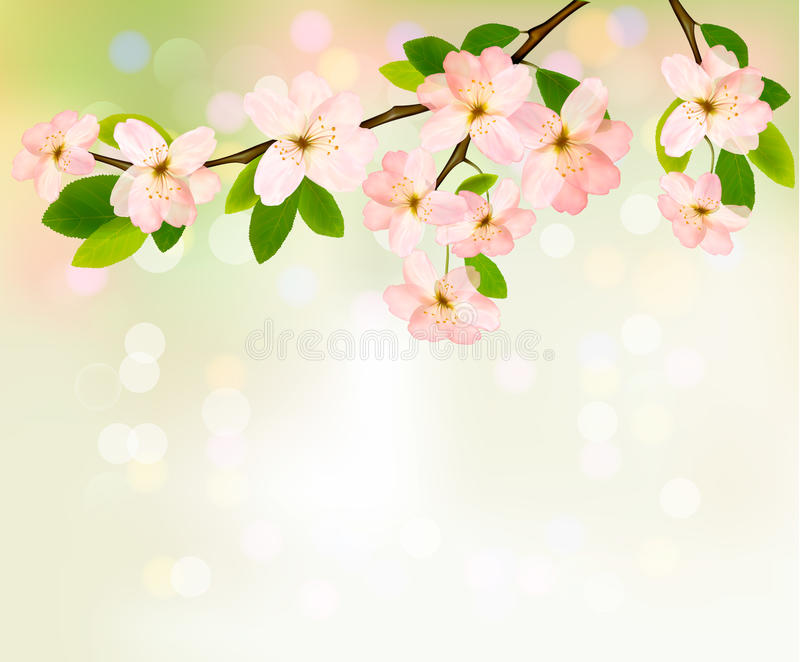 Spring Background With Blossoming Tree Stock Photography