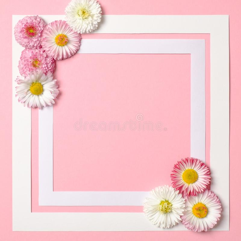 Spring background with border frame and daisy flowers in corners. Banner template for spring sales, discount. Minimalistic spring. Flowers concept. Flat lay stock images
