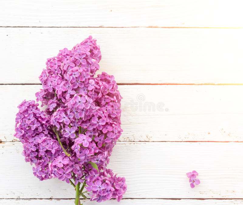 Spring background with bouquet of the flowers of lilac on white wooden boards in the sunlight royalty free stock photography