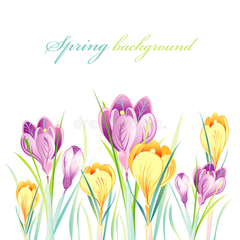 Spring Background With Crocuses Stock Photos