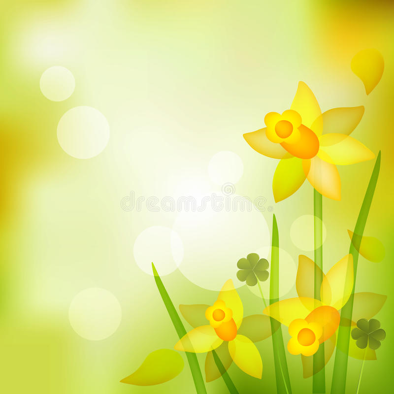 Spring background. Daffodils flowers and clovers vector illustration