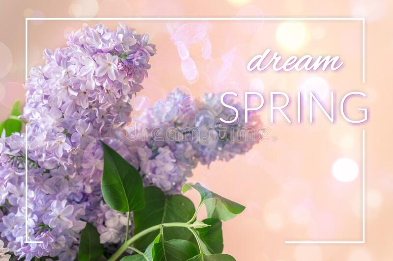 Spring background design with purple blue lilac flowers and bokeh royalty free stock images