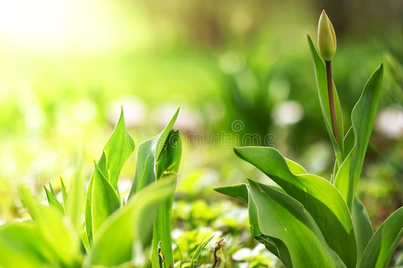 Spring background. Green flowers stock photo