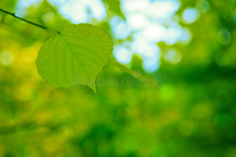 Spring background with green leaf, stock photography