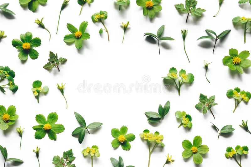 Spring Background With Green Plants royalty free stock image