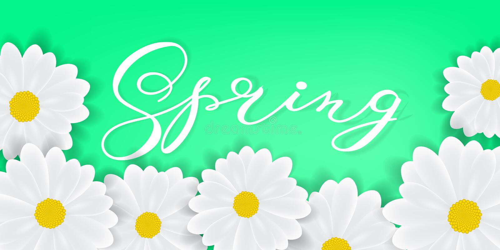 Spring background with hand writening lettering Spring word, white daisies or gerbers royalty free illustration