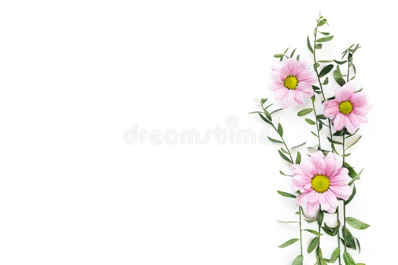 Spring Background With Green Leaves And Pink Daisy Flowers royalty free stock photo