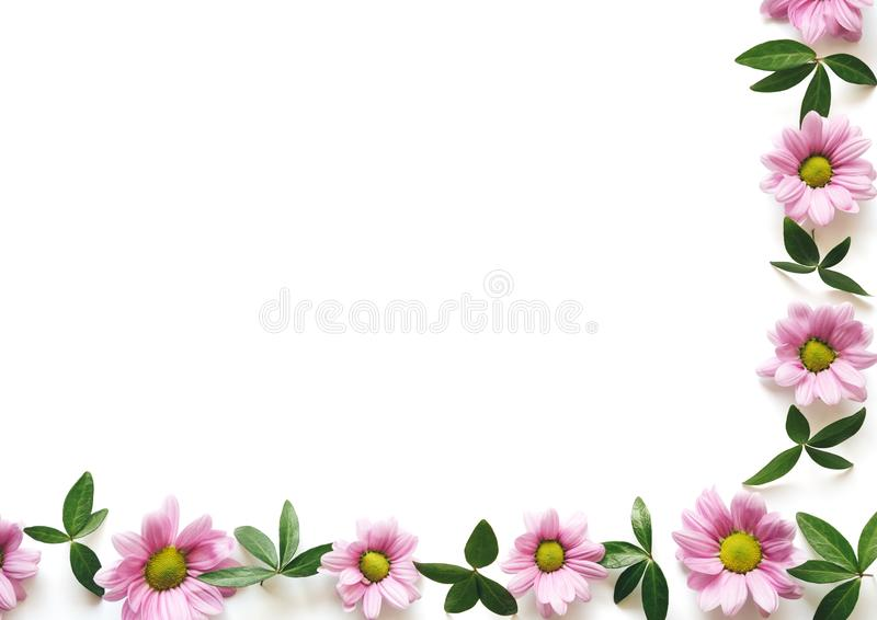 Spring Background With Green Leaves And Pink Daisy Flowers stock image