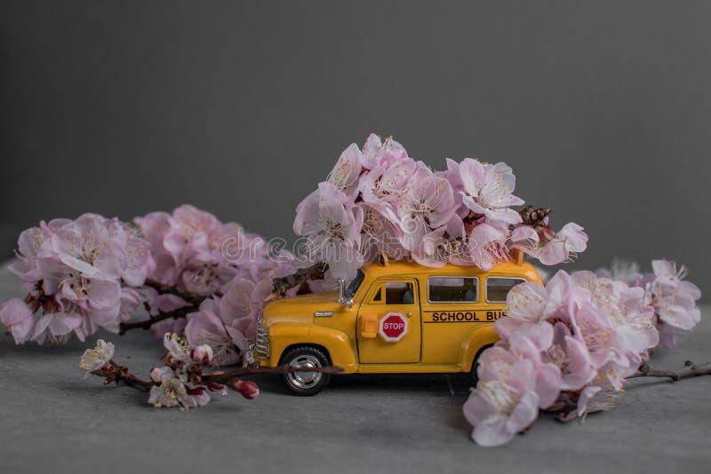 School Spring background with sakura, spring almond blooms as almonds blossom, pink buds on tree, photophone sakura mystery spring. Spring background with sakura stock photo