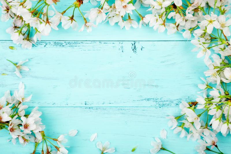 Turquoise spring background with cherry blossom royalty free stock photos