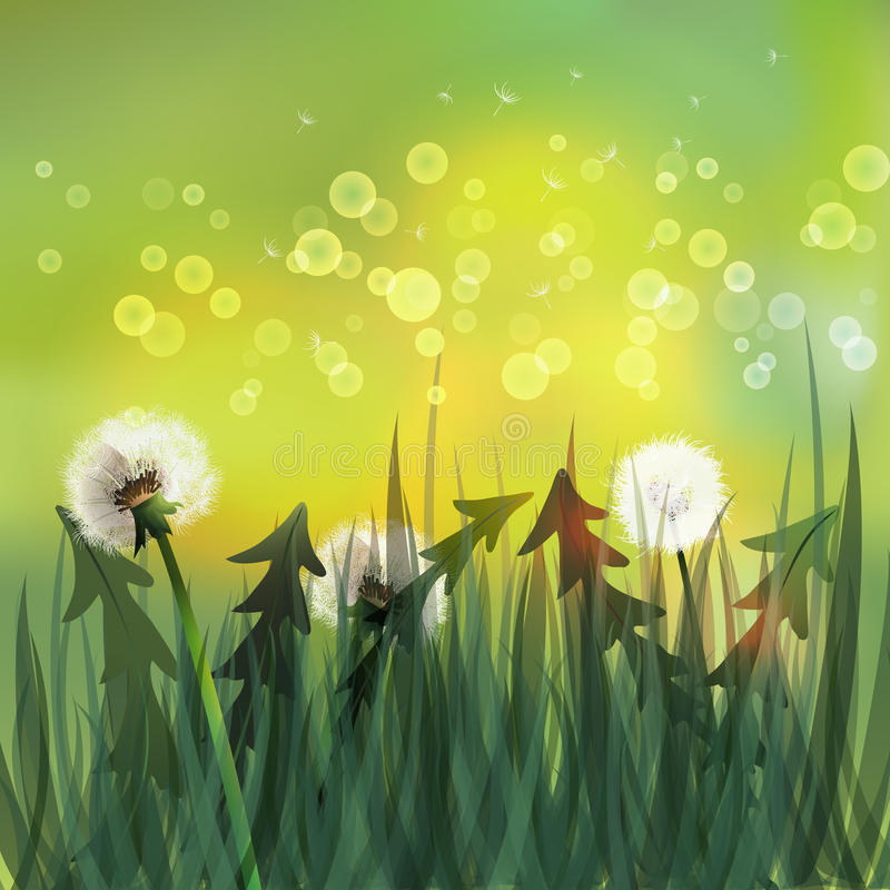 Spring background with white dandelions. vector illustration