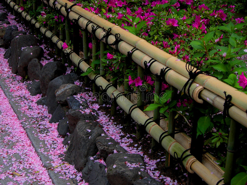 Spring bamboo fence stock photography