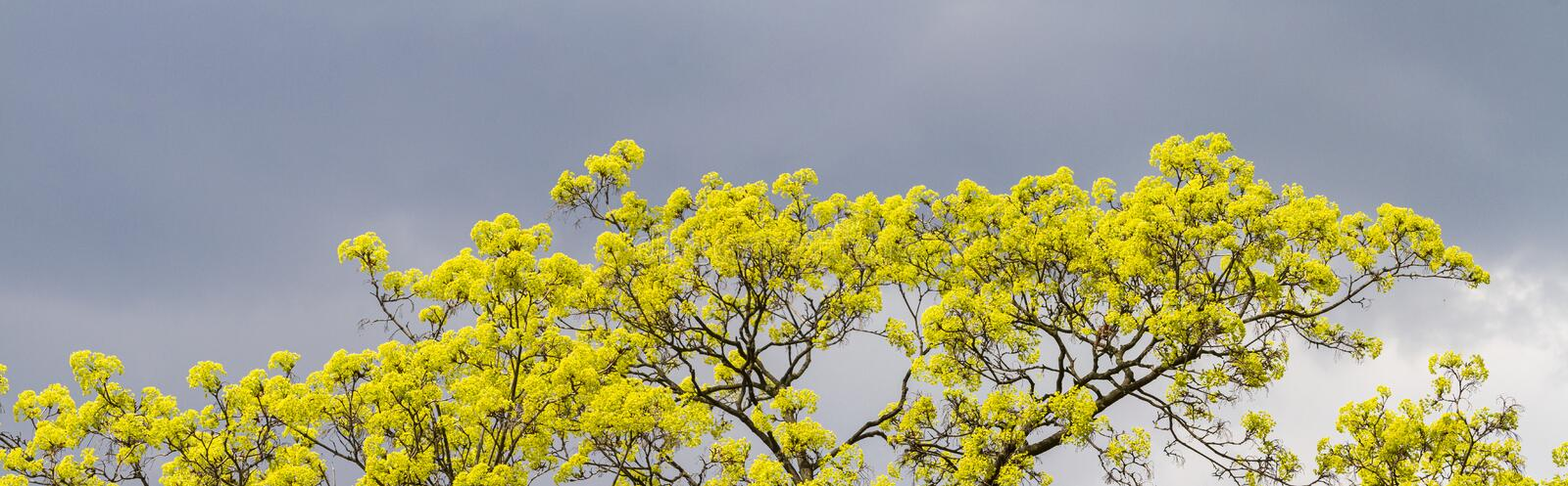 Spring banner with a blossoming tree and a beautiful sky stock images