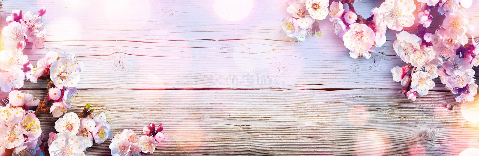 Spring Banner - Pink Blossoms. On Wooden Plank royalty free stock photography