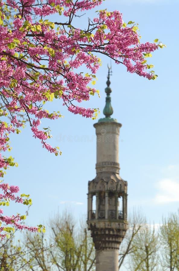 Spring and baroque style minaret, Istanbul, Turkey stock photos