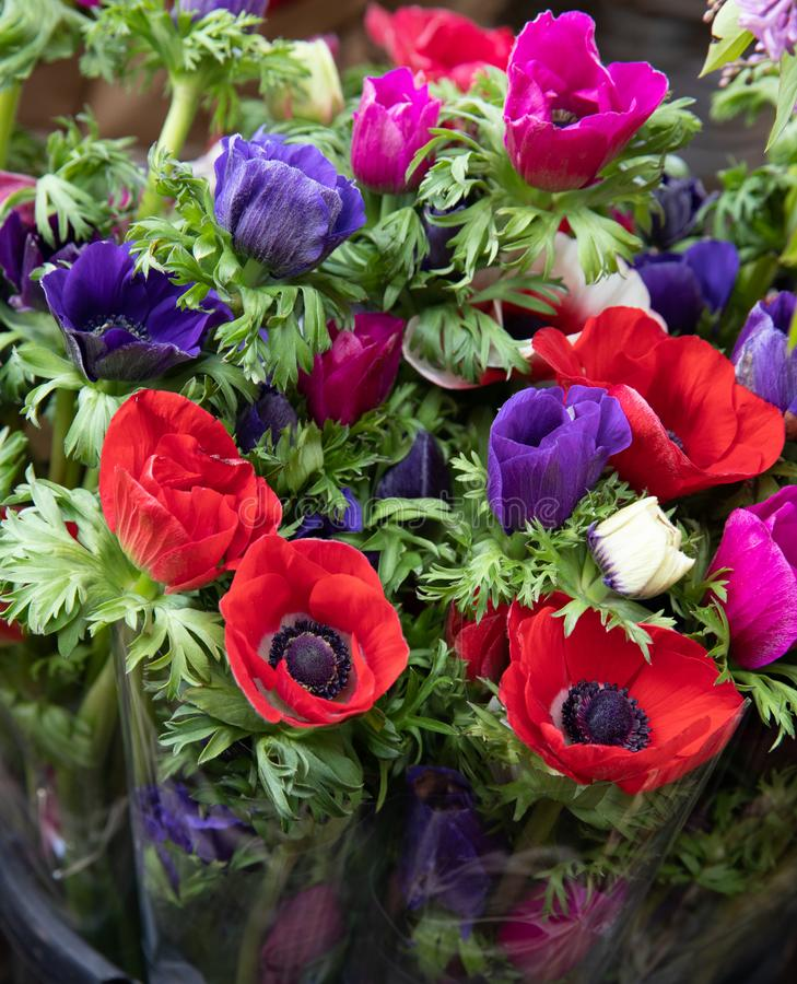 Spring. Beautiful bouquets of Anemone coronaria flowers in red, blue, violet colors in the garden shop. stock photo