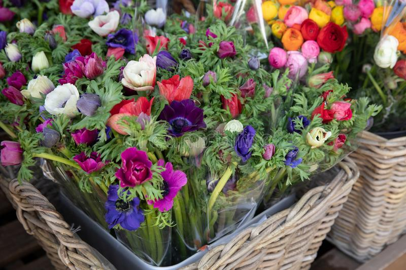 Spring. Beautiful bouquets of Anemone coronaria flowers in red, blue, violet, white colors in the garden shop. royalty free stock photography