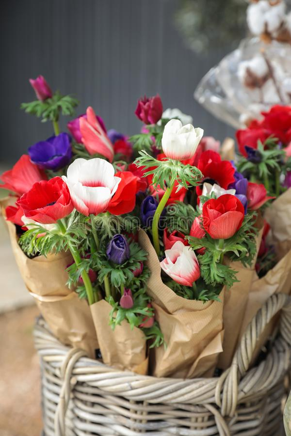 Spring. Beautiful bouquets of Anemone coronaria flowers in red, blue, violet, white colors in the garden shop royalty free stock images