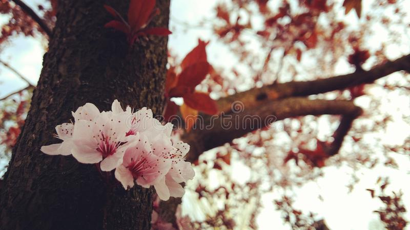 The Spring stock photography