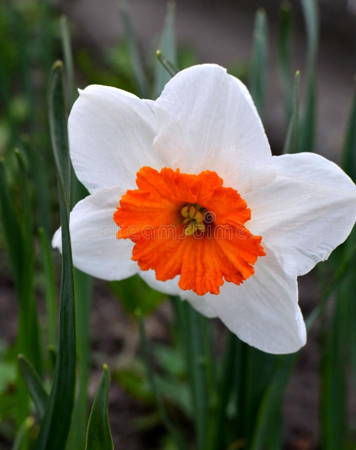 Spring beautiful flower stock images