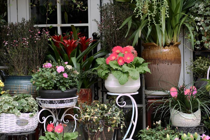 Spring beautiful flowers in flowerpot stock images