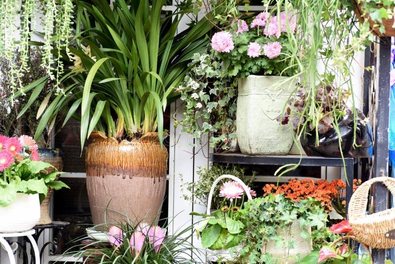 Spring beautiful flowers in flowerpot stock photos