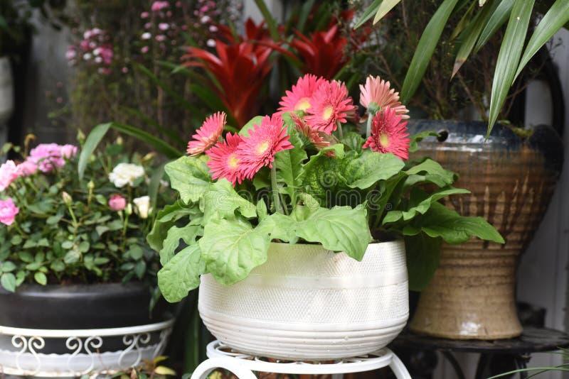 Spring beautiful flowers in flowerpot royalty free stock photo