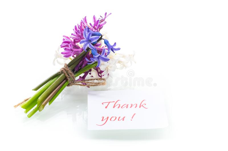 Spring beautiful flowers of a hyacinth with a thank you card stock photography