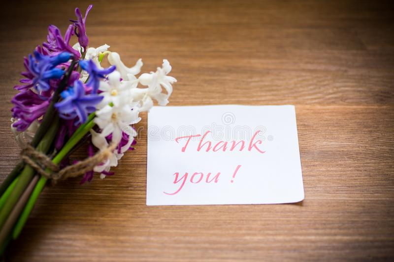 Spring beautiful flowers of a hyacinth with a thank you card royalty free stock image